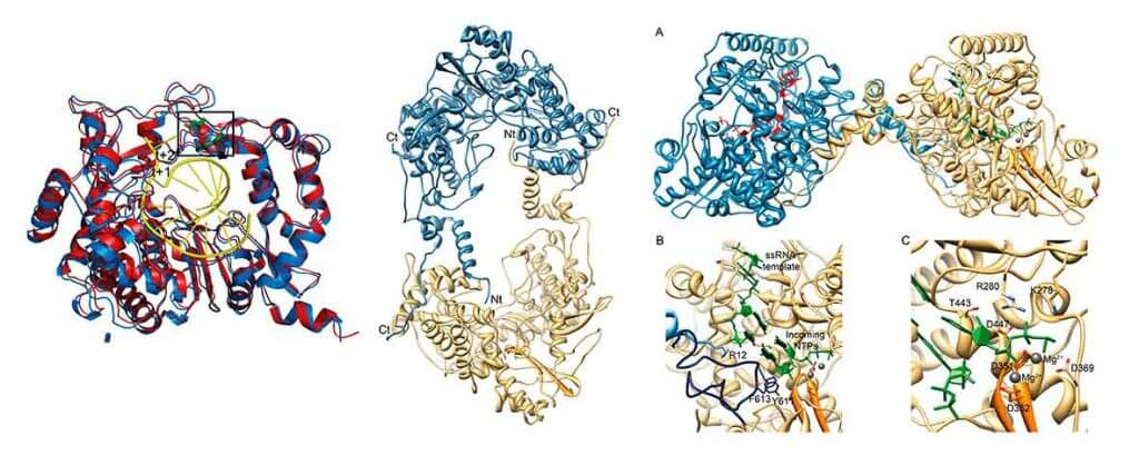 Virus and Large Biological Complexes, SBU