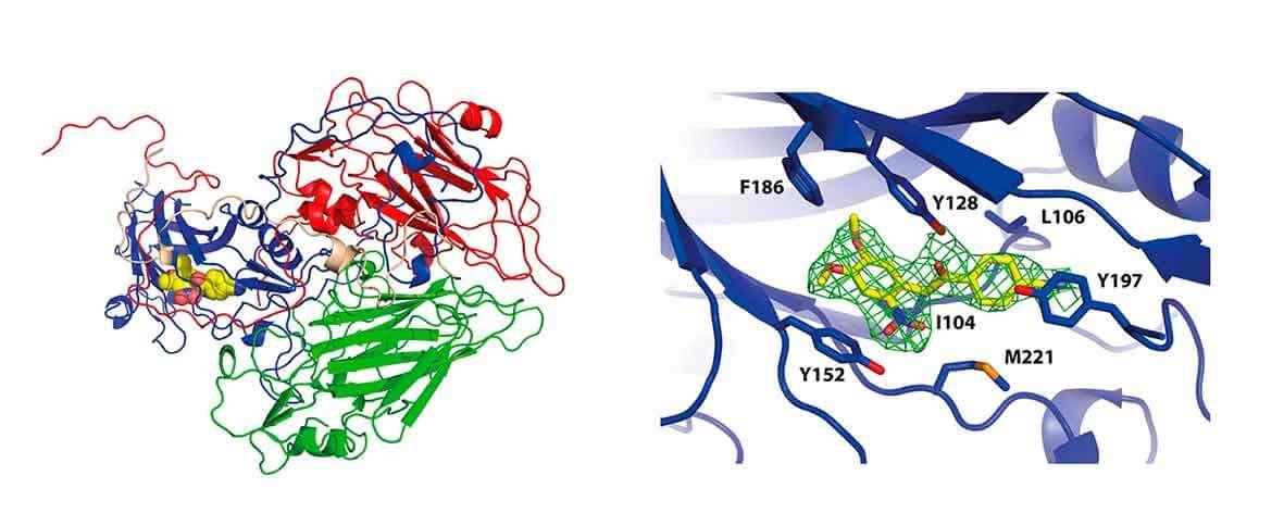 RNA dependent RNA polymerase