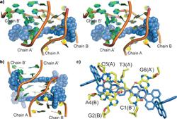 Bis-dipyridophenazine into DNA double helix