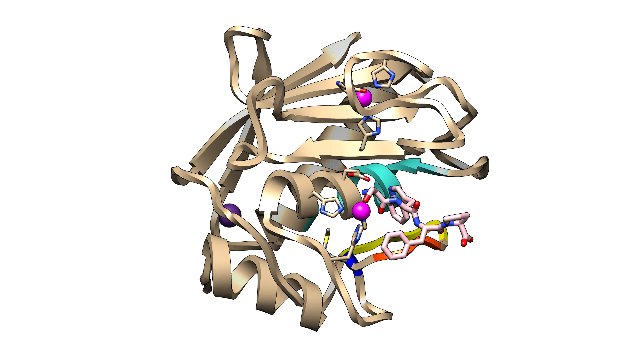 Catalytic domain Kly18