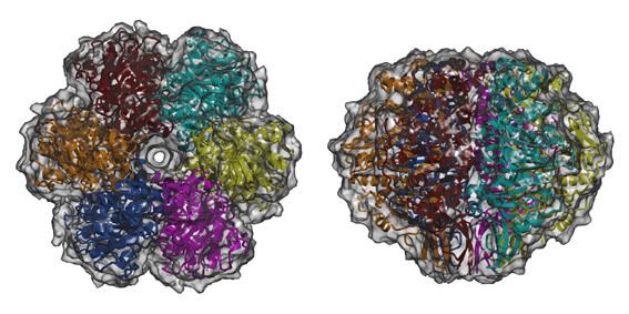 conjugation protein TrwB