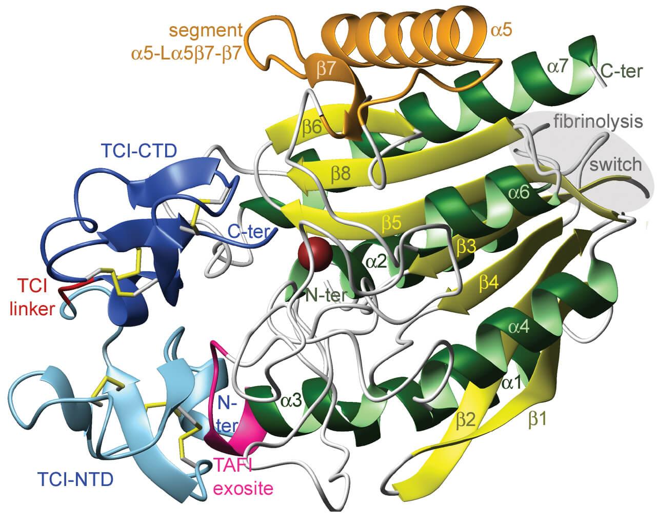TAFIa funnelin inhibitor