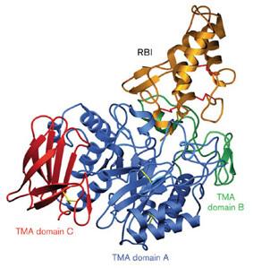 Tenebrio molitor α amylase inhibitor