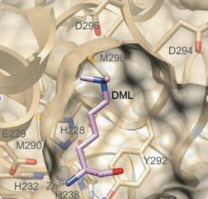 lyserginase-methylation-insensitive