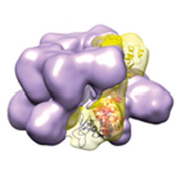 Mitochondrial Macromolecules