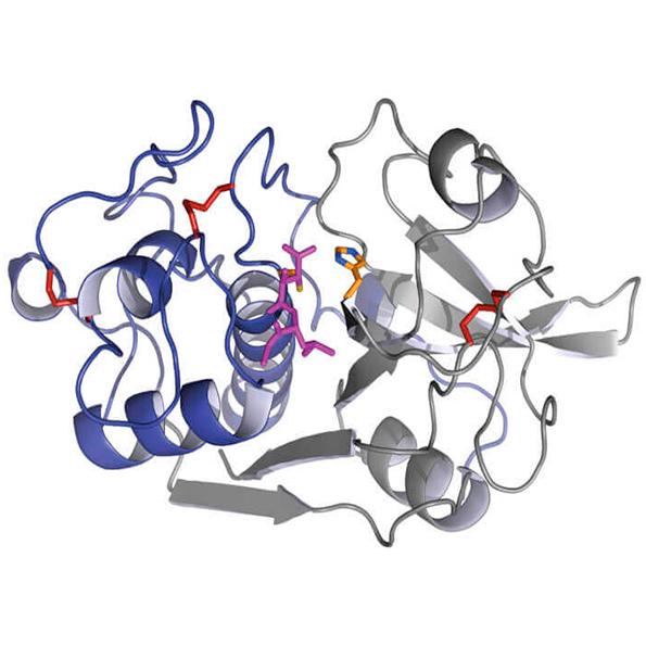 Proteolysis Laboratory